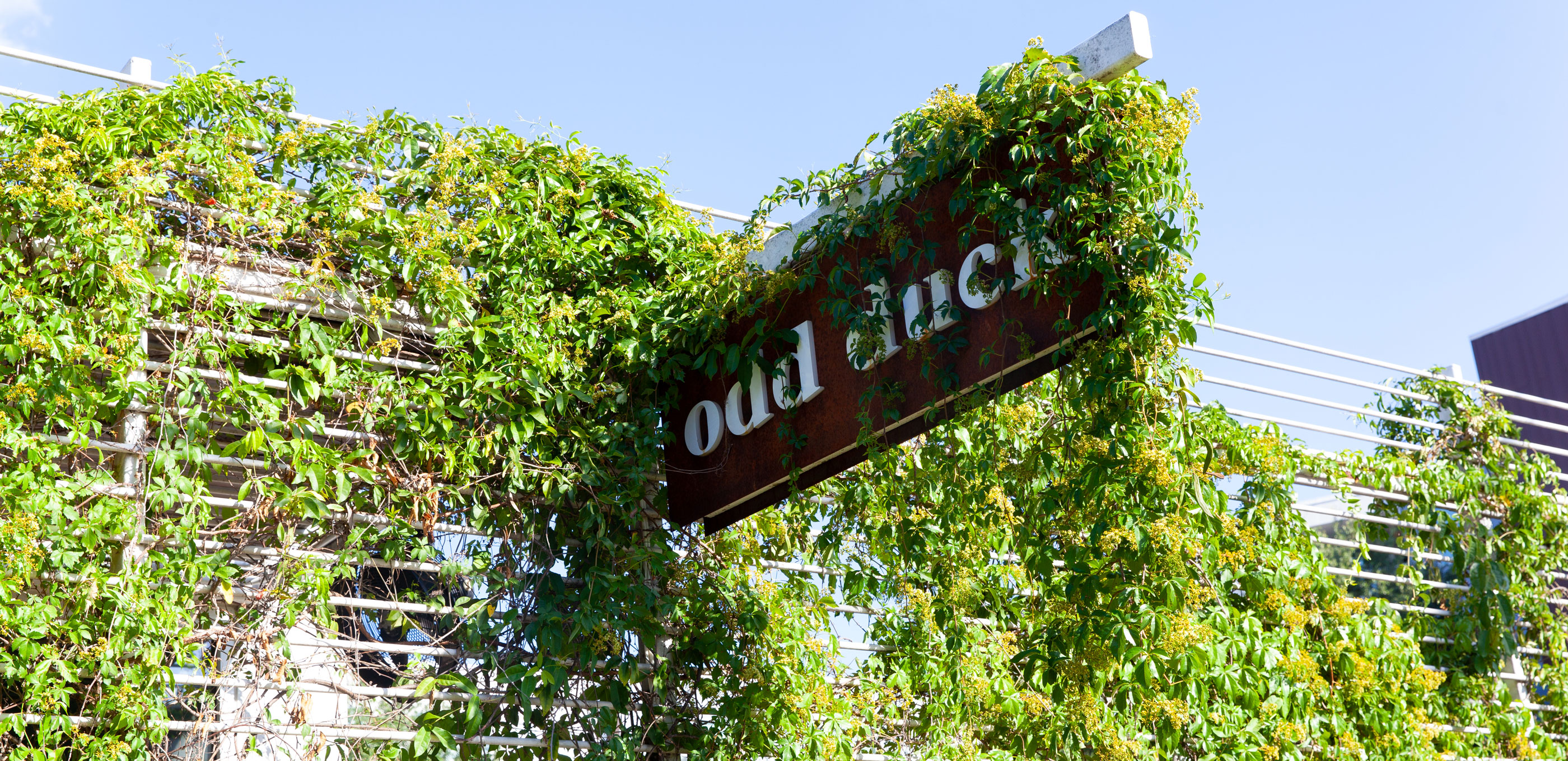 Odd Duck – Austin, TX